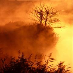 Lever de Soleil sur le Jaunay, Vendée (pom.angers) Tags: panasonicdmctz3 october 2007 givrand saintgillescroixdevie lessablesdolonne jaunay vendée 85 paysdelaloire france europeanunion côtedelumière river mist sunrise 400 500 100 150 200 300 fog