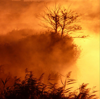 Lever de Soleil sur le Jaunay, Vendée