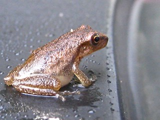 just how  tiny is this frog?