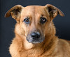_H002188 (b.kunst17) Tags: nikon d500 nikkor 70200 hund hunde haustier haustiere tier tiere animal animals pet pets dog freistellung knochen blick 20170805