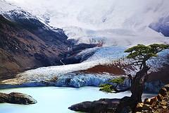 Patagonia (Andrea Loria) Tags: glacier glaciar ghiacciaio albero nature ice blue porcoddio