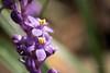 249/365 (Daegeon Shin) Tags: nikon d750 nikkor 55mmf28 flower flor macro dof liriopeplatyphylla 맥문동 365 니콘 니콘렌즈 꽃 마크로 접사 심도