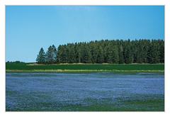Flower splendor in blue sky (bavare51) Tags: blau felder wald sky schweden