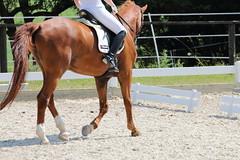 _MG_5653 (dreiwn) Tags: dressage dressurprüfung dressurreiten dressurpferd dressyr ridingarena reitturnier reiten reitverein reitsport ridingclub equestrian horse horseback horseriding horseshow pferdesport pferd pony pferde dressur dressuur tamronsp70200f28divcusd