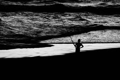 on food search (moltofredo) Tags: bw black white sw schwarz weiss noiretblanc monochrome natur nature silhouette