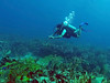 GOPR0180 (dchrisoh) Tags: holbox mexico tourist traveler vacation yuccatan scuba dive diver fish ocean stonefish beach chiquilla playa puertomorelos lascoches whaleshark wetset
