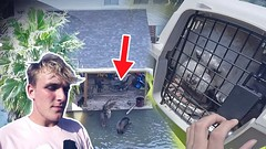 Saving Animals Caught In The Hurricane (emotional..) (abhigyandms) Tags: 10 actor adventure angeles bizaardvark bro brothers channel comedy cool costell crazy daily damage day disney dobre emotional erika every facebook family flight friendly fun funny girls helicopter hollywood homes hot hurricane instagram its jake jakepaulers kids logan logang lopez los lucas marcus over paul pg ride sad sexy skits star tai team through tv victims vine vlog wether wow