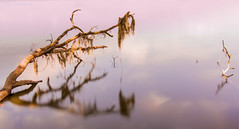 The Fallen Tree (JDS Fine Art Photography) Tags: tree water fallentree ndfilter neautraldensity longexposure nature beauty naturesbeauty naturalbeauty inspirational colors
