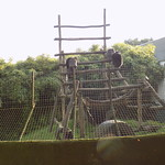 Olmense zoo 3e kleuterklassen