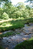 2017-08-28 cannock chase 045 (sonya.britton) Tags: cannockchase staffordshire ancientforest wood forest walk family tree stream