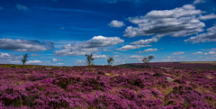 4 trees (Phil-Gregory) Tags: trees purple sky clouds nikon d7200 national nature nationalpark naturalworld naturephotography countryside colour color sigma18250macro padleygorge scenicsnotjustlandscapes landscapes ngc