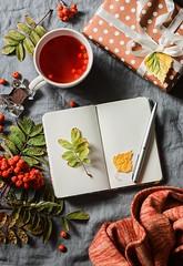 autumn mood... (sonja-ksu) Tags: drinks food autumn tea ash notebook stilllife scarf autumnmood foodphotography foodstyling