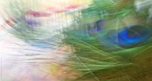 Swaying Breezy Colour Burst