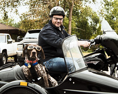 MotoDog_ManBDMC2cu (Sandi Beaudoin) Tags: harleydavison sidecar motorcycle harley hog fatboy germanshorthairretriever black cycle biker bikers dog hunter pointer spotted spots helmet goggles roadhog cooldude bluejeans leather roadtrip travel sundaydrive
