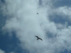 Scheveningen Strand (Elad283) Tags: holland haag hague thehague denhaag netherlands nederland scheveningenstrand scheveningen strand thenorthsea beach promenade northsea pier gull seagull