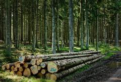 felled trees in the forest (Herr Nergal) Tags: fz1000 panasonic lumix bridge sensor saarland wadrill wald forest alm holz wood nature landscape landschaft baum tree wälder herrnergal nergal green grün atmosphäre atmosphere mood 7dwf