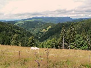 Simonswald - Germany (2005724)