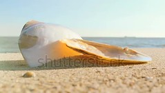 Shells on the beach. (daria.boteva) Tags: aquatic background beach blue calm climate coast coastline conch copy day exotic holiday idyllic jewelry lagoon landscape marine nature object ocean outdoors pacific paradise pearls relax relaxation resort rest sand sea seascape seashell seashore shell sky space star summer sun sunlight sunny sunshine tourism tranquil travel tropical vacations water