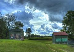 The Running Dog (a56jewell) Tags: a56jewell dog sunning summer sept green kilns