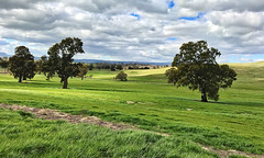 Spring (Denis Fox) Tags: gold green grass