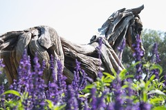 Horse on a Bed of Flowers (loyd87) Tags: xsi dof wood park purple flower horse canon