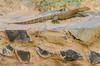 SENEGAL -  349 (Giulio Mazzini) Tags: adventure africa avventure black desert face free holiday landscape libertà portrait river senegal sun teranga world