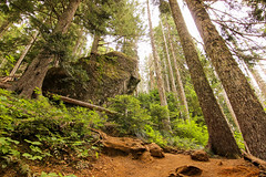 Up (csquags) Tags: pnw washington hike trees nature hiking rocks rock boulder
