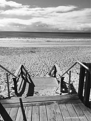 A day on the beach, Palm Beach, QLD photo©jadoretotravel (J'Adoretotravel) Tags: blackandwhite waterlife australianbeaches australia queensland lifeisabeach lifeinblackandwhite jadoretotravel goldcoast palmbeach