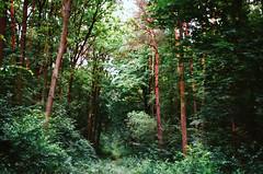 lasek (undertovv) Tags: 35mm analog vibes green nature poland tree trees werifesteria milosc ambient