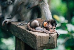 Shy (Mohammed Mosbah) Tags: monkey small cute little bali indonesia forest natgeo jungle colors vsco vscom vscocam travel