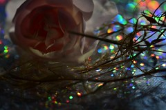 Abstrakt  MM (Pixelchen1) Tags: rose wasser hologramm verblühtes glas nikon105mm12 micro fades water macro macromondays abstractmacro members choiceabstract