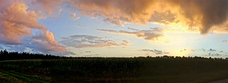 Panorama - Maisfeld Sonnenuntergang | Cornfield Sunset - DE [explored]