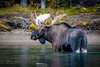 Moose ahead! (christianschmaler) Tags: moose maligne lake see canada jasper national park kanada rocky mountains elch canoe kanu beautiesbeasts