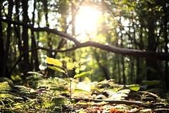 Crack of Light (jonathanbarroso) Tags: day beauty outdoors fauna flora nature sun light jungle woods