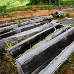 Log yard thumbnail