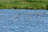 Vogelschwärme (juergen.treiber) Tags: schwimmendesmoor sehestedt jadebusen
