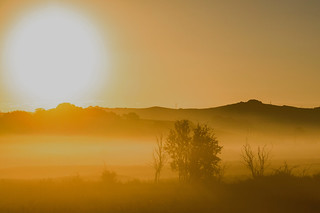 Golden Mist.