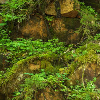 Mossy rock and ferns
