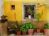 Ceramics Shop, Alfama, Lisbon (Jocelyn777) Tags: textured architecture houses windows plants lisbon portugal travel