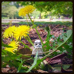 MY NAME IT MEANS NOTHING.  MY AGE IT MEANS LESS. (domster_92) Tags: tokyo japan stormtrooper lego star wars spring
