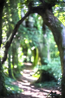 Woodland Trail Defocused