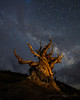 Ancient (Jeffrey Sullivan) Tags: ancient bristlecone pine milky way inyo national forest county bishop california usa eastern sierra astronomy astrophotography landscape nature canon eos 6d photo copyright august 2016 jeff sullivan photography old tree