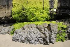 Mossy cliffs, Oceanside beach, Oregon (nikname) Tags: mossycliffs moss green oceansideor oceansideorbeach oregonbeaches