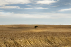 IMG_0680 Lonely (jaro-es) Tags: nature natura natur naturewatcher naturemaster naturesfinest landschaft landscape baum arbol tree canon españa eos70d spanien spain spanelsko