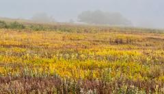 Big Meadows Flora and Fog (dngovoni) Tags: bigmeadows virginia clouds flowers fog landscape sky summer sunrise