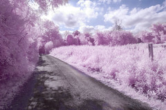 Infrared path (lilredlizzie) Tags: infrared infraredcamera path nature outdoors outside clouds sky pretty beautiful interesting canon canong10 massachusetts newengland hornpond tree