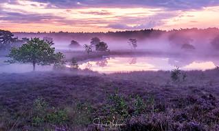 Het Bergerbos - Afferden, Netherlands