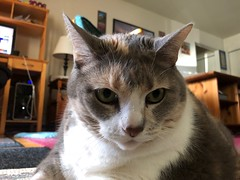 Hi everybody, remember me? (Hazboy) Tags: norm normandy pussycat evil hazboy hazboy1 feline gato gatto kot kat katze