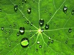 Wassertropfen (Wallus2010) Tags: tropfen wasser wassertropfen nahaufnahme tau morgentau
