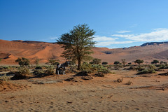 (mdiec) Tags: namibia africa landscape mountains hills sossusvlei desert dunes namib sand sunrise sky oryx wildlife trees